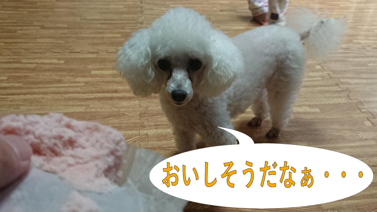 犬にパンをあげても大丈夫?娘のパンを欲しがる我が家のわんこ♪