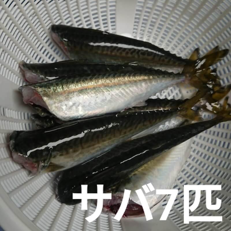 家族で楽しくフィッシング!夢舞大橋の下で釣りをしてきました♪【大阪の釣りスポット】