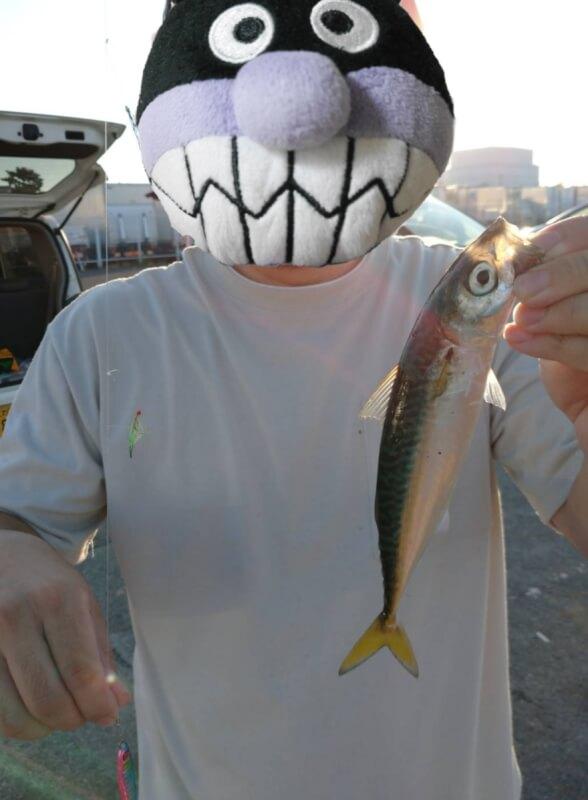 【大阪】サビキ釣りで大量150匹!!汐見埠頭(砂上げ場)でファミリーフィッシング【釣り】ジグサビキで釣れたサバ