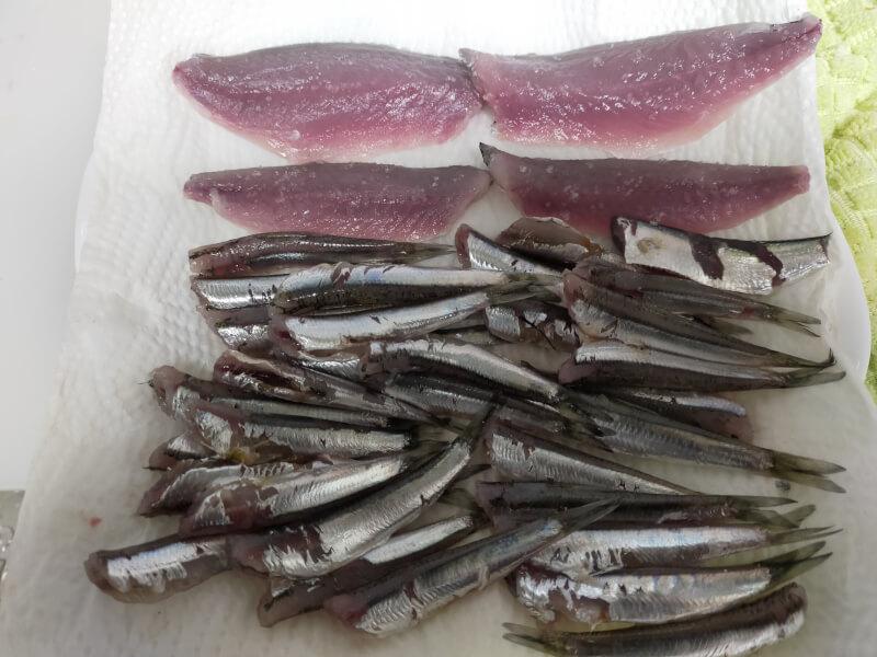 ヌルヌルすぎる奇妙な魚!?「ヒイラギ」食べてみたら絶品でした【ファミリーフィッシング】サバとイワシ