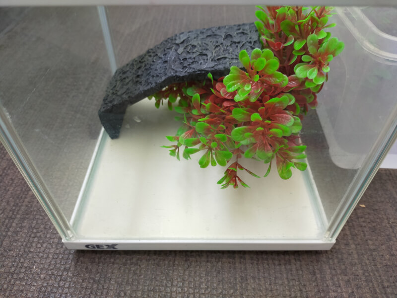 【我が家のカメ】亀の水槽を模様替えしてみました♪【ミシシッピニオイガメの飼育観察】