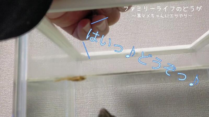 【補助食】TetraAnchovies(テトラ アンチョビ)をあげみた♪【ミシシッピニオイガメ】