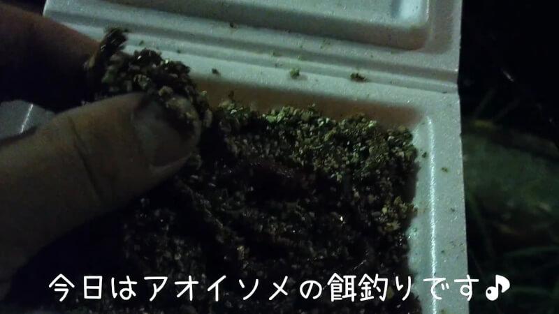 【南港大橋】夜のアオイソメの餌釣りでクロソイがヒット!美味しく調理して食べちゃいました♪【大阪】