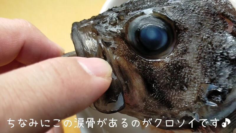 【南港大橋】夜のアオイソメの餌釣りでクロソイがヒット!美味しく調理して食べちゃいました♪【大阪】クロソイの見分け方 涙骨