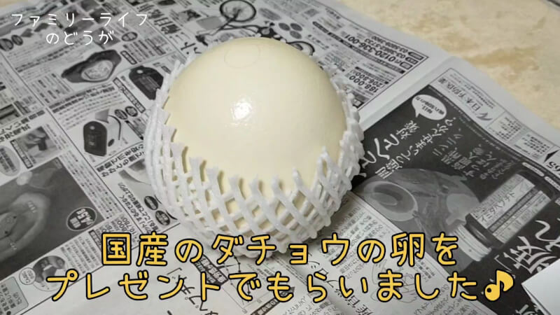 【ダチョウの卵】巨大な卵を初めての殻割り♪プリンを作ってみた♪【美里オーストリッチファーム】国産