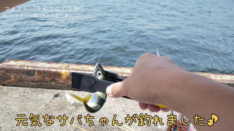 【南港】息子と娘を連れてサビキ釣り♪ジグサビキでも釣れて楽しめました♪【家族の時間】