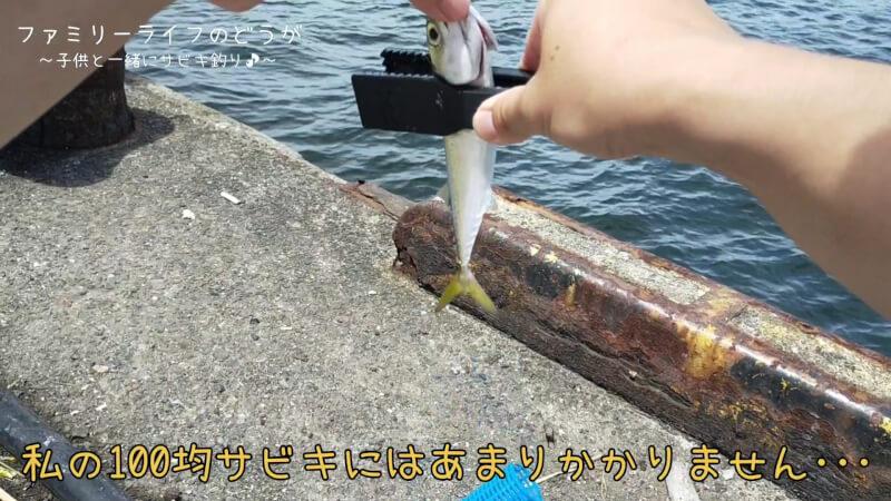 【南港】息子と娘を連れてサビキ釣り♪ジグサビキでも釣れて楽しめました♪【家族の時間】サバ